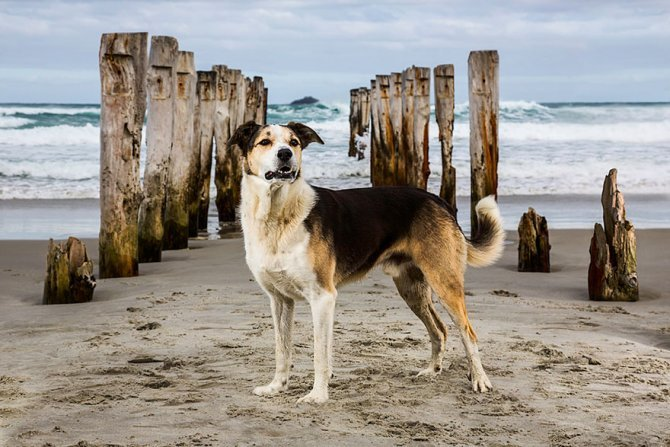 working dog photography shepherds realm andrew fladeboe 10