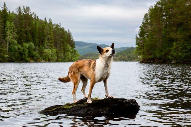 working dog photography shepherds realm andrew fladeboe 15