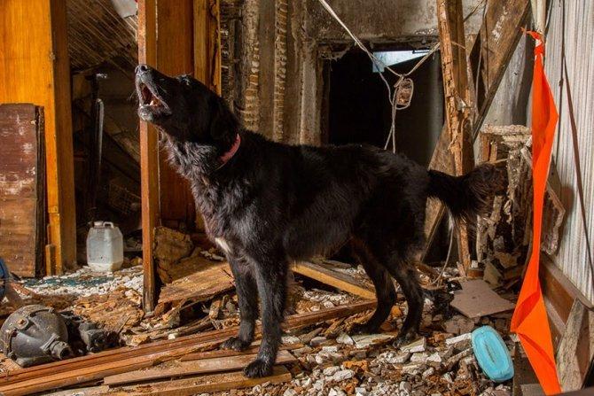 working dog photography shepherds realm andrew fladeboe 20
