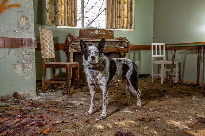 working dog photography shepherds realm andrew fladeboe 21