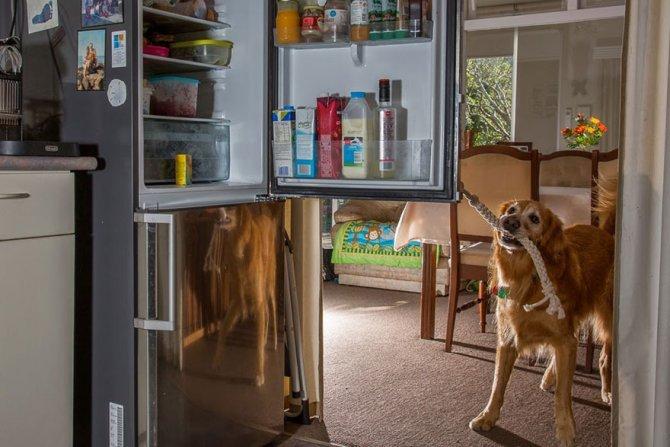 working dog photography shepherds realm andrew fladeboe 29