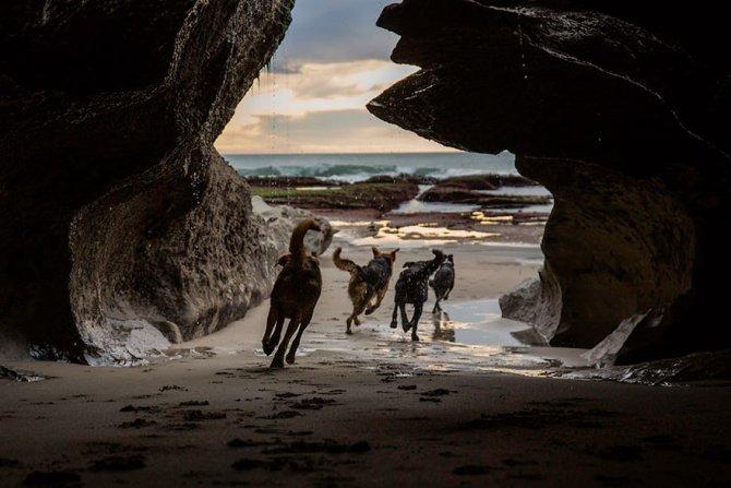 working dog photography shepherds realm andrew fladeboe 7