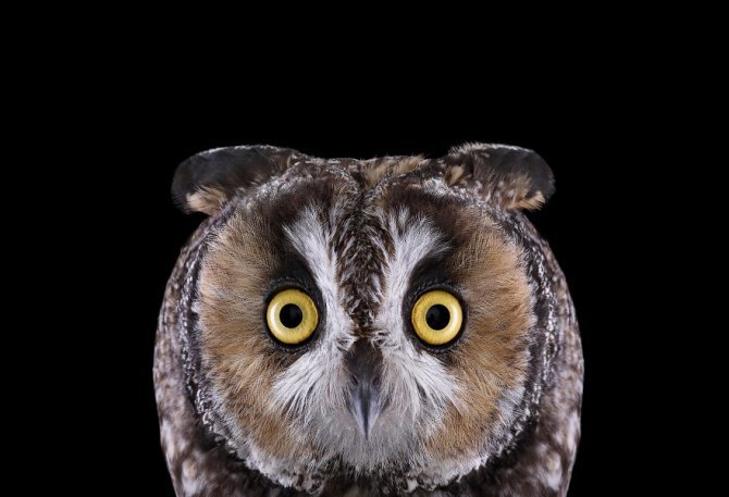 THE SURREAL BEAUTY OF OWLS 880