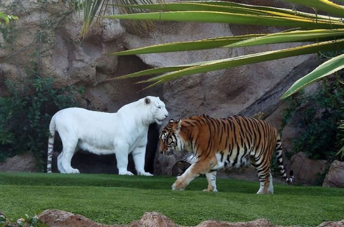 albino-animals-1__880