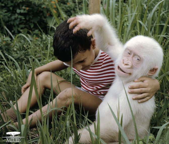 albino animals 3 6 880