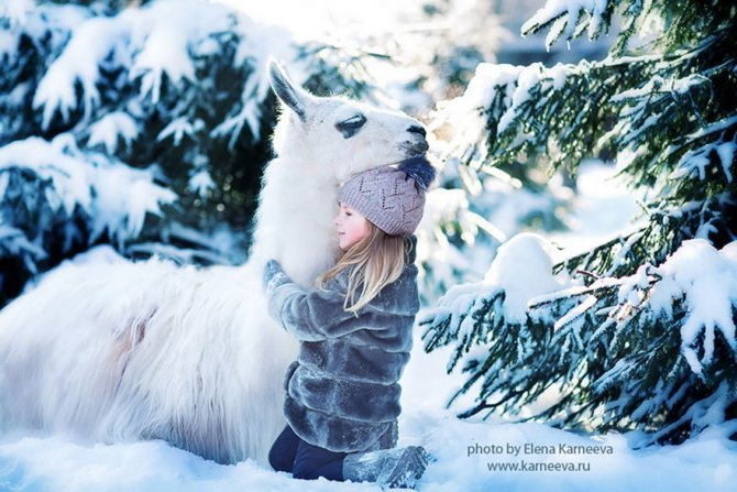 animal children photography elena karneeva 222 880