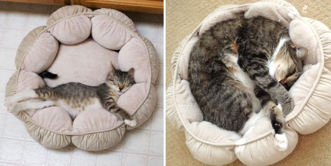 before and after growing up cats 11 880