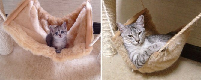 before and after growing up cats 14 880
