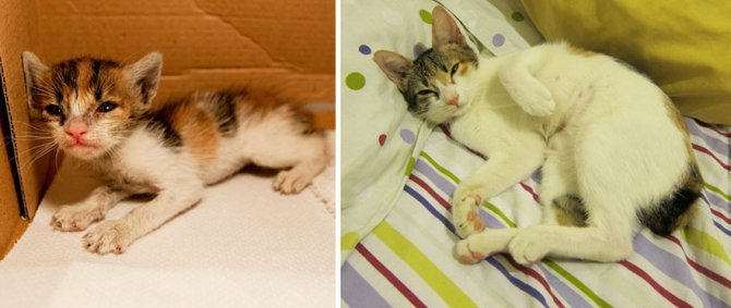 before and after growing up cats 30 880