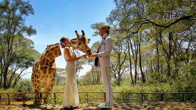 couple wedding around the world travel cheetah rhiann 11