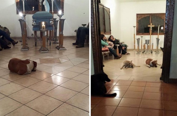 stray dogs pay respects funeral animal lover margarita suarez yucatan mexico 12
