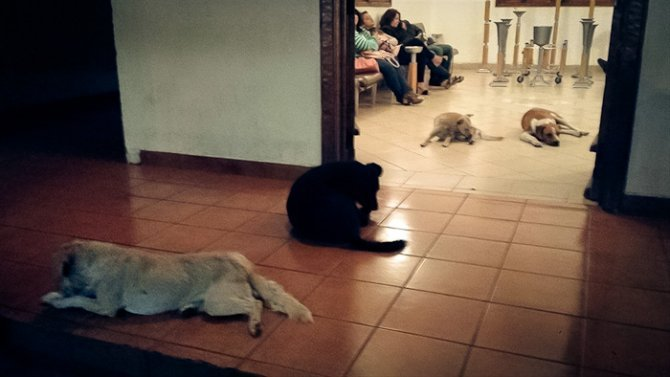 stray dogs pay respects funeral animal lover margarita suarez yucatan mexico 15