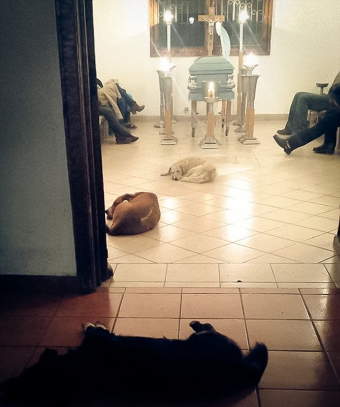 stray dogs pay respects funeral animal lover margarita suarez yucatan mexico coverimage