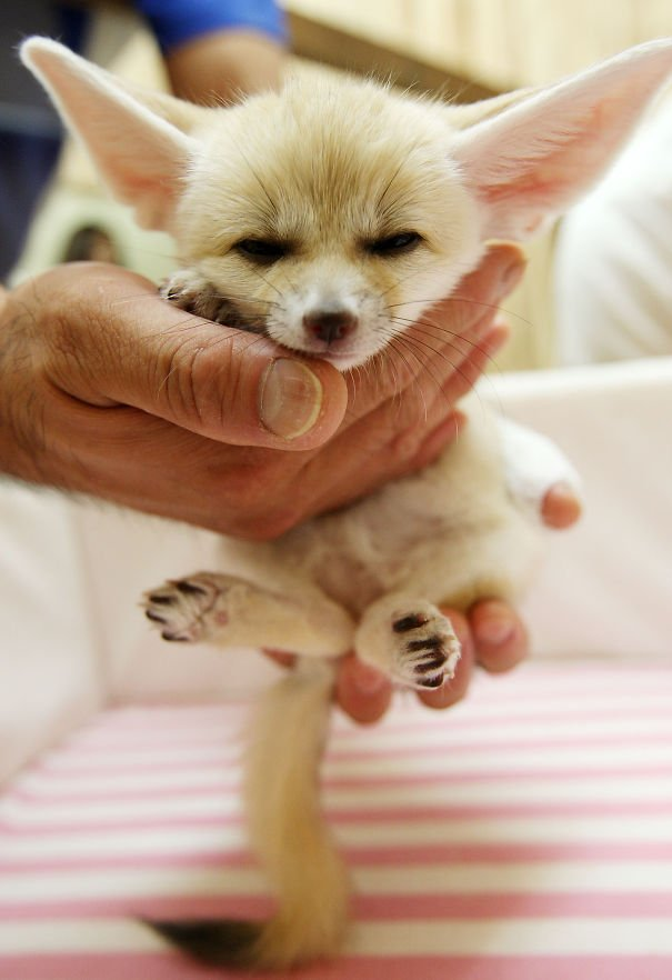 cute baby animals palms hands 23 605