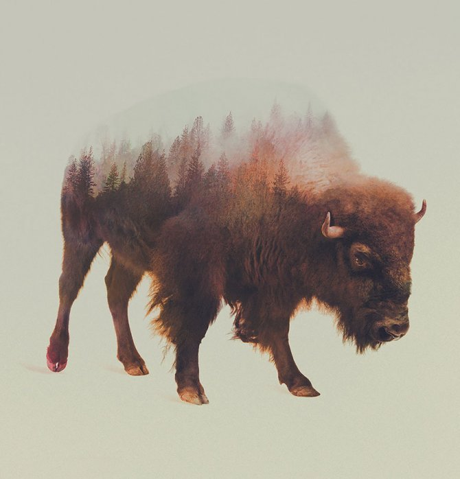 double exposure animal photography andreas lie 10 880