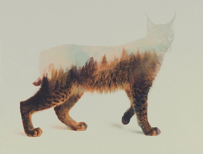 double exposure animal photography andreas lie 12 880
