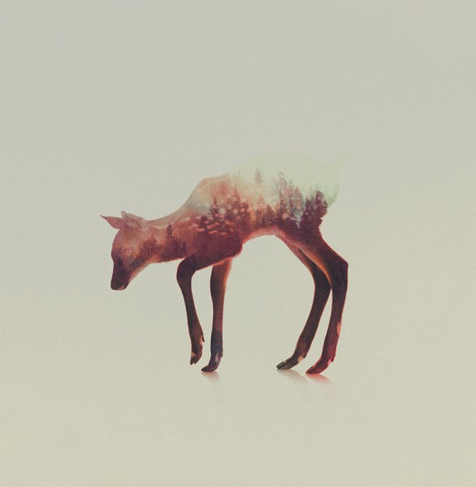 double exposure animal photography andreas lie 14 880