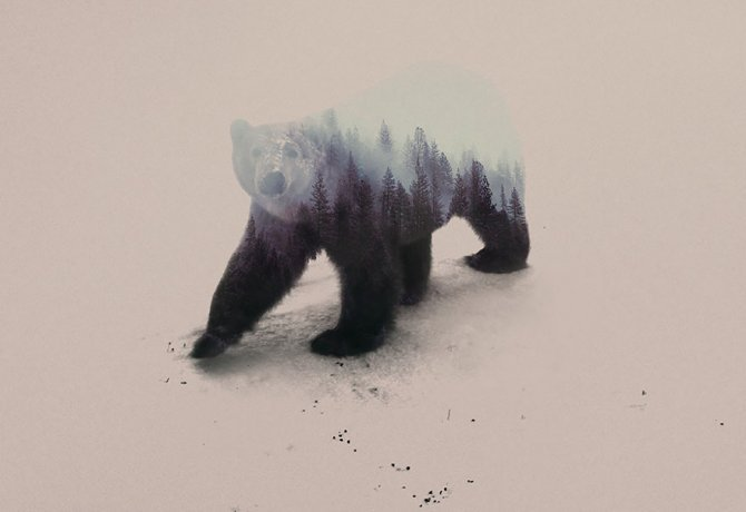 double exposure animal photography andreas lie 19 880