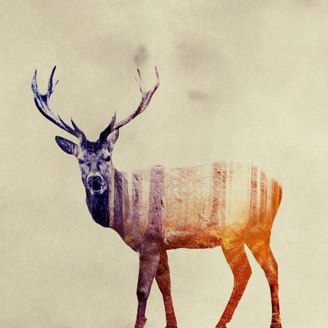double exposure animal photography andreas lie 21 880