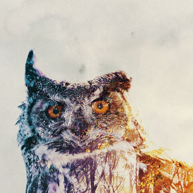 double exposure animal photography andreas lie 23 880