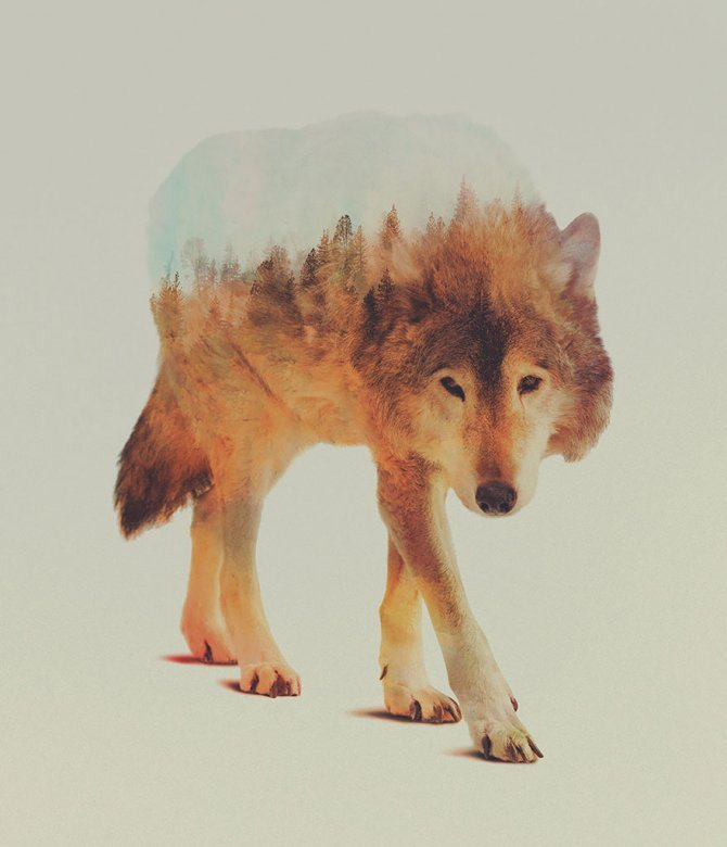 double exposure animal photography andreas lie 2 880