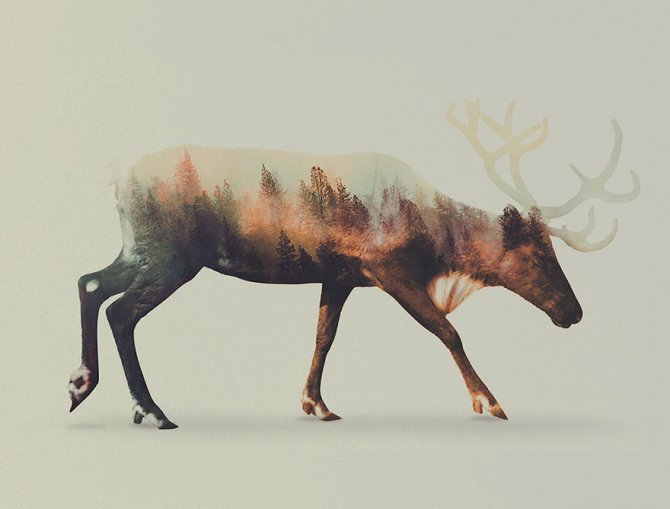 double exposure animal photography andreas lie 4 880