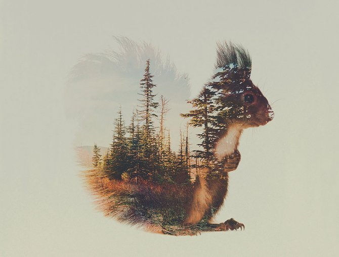double exposure animal photography andreas lie 8 880