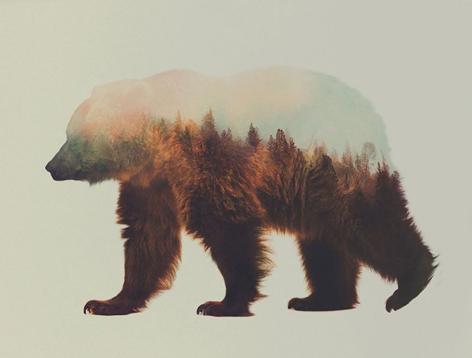 double exposure animal photography andreas lie 9 880