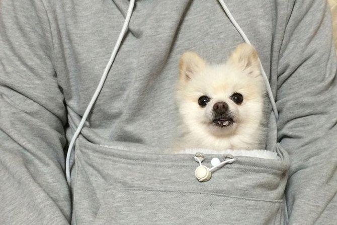 hoodie cat pouch pocket sweatshirt mewgaroo 9