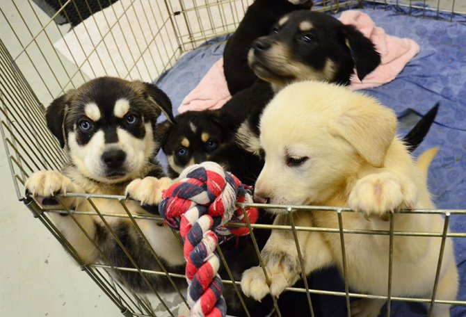 puppy-room-stressed-out-students-university-of-lancashire-5