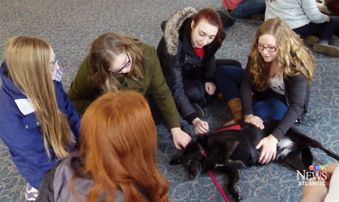 puppy-room-stressed-out-students-university-of-lancashire-8