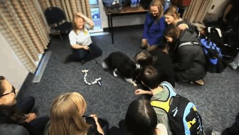 puppy-room-stressed-out-students-university-of-lancashire-9