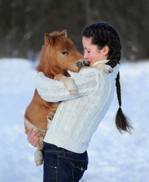 tiny horses 10 605