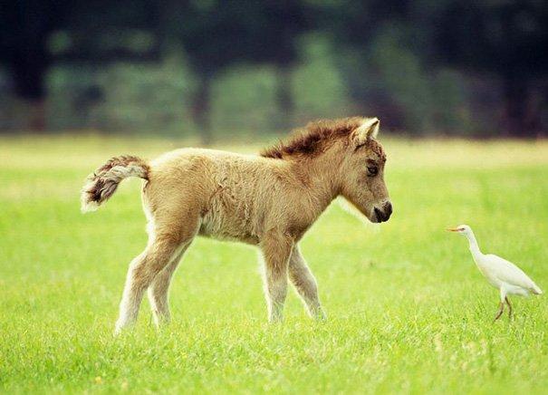 tiny horses 19 605