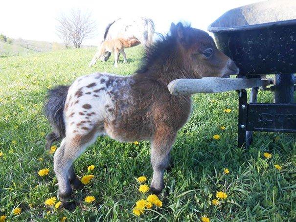 tiny horses 1 605
