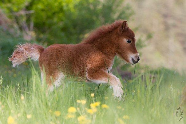 tiny horses 27 605