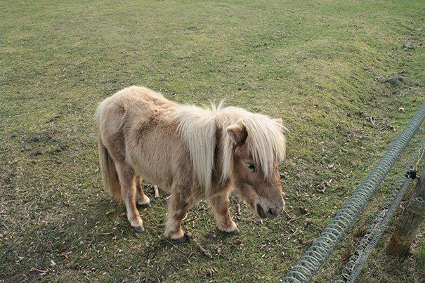 tiny horses 4 605