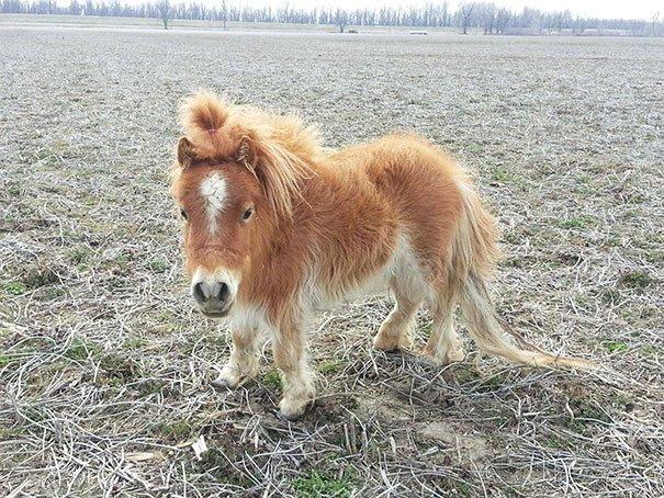 tiny horses 5 605