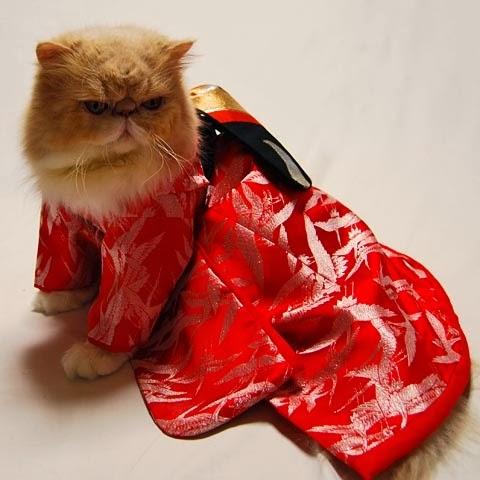 2d570-kimonocat