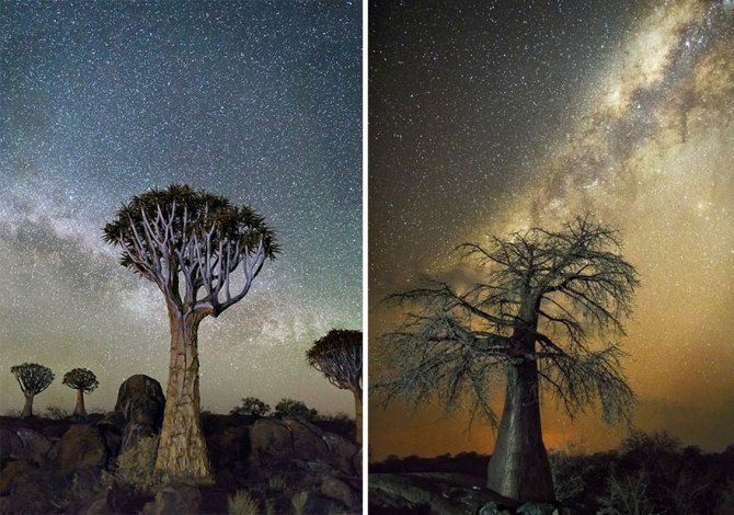 ancient oldest trees starlight photography beth moon 2