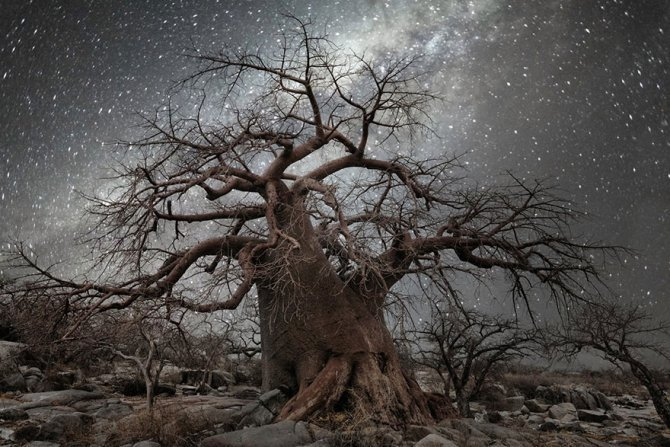 ancient oldest trees starlight photography beth moon 3