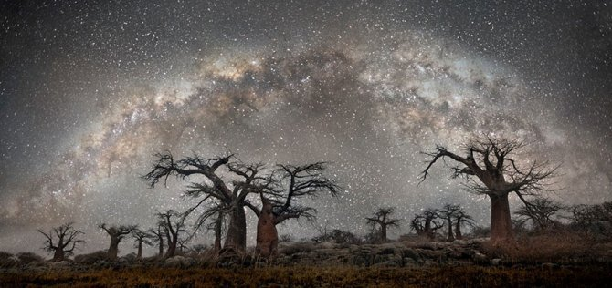 ancient oldest trees starlight photography beth moon 5