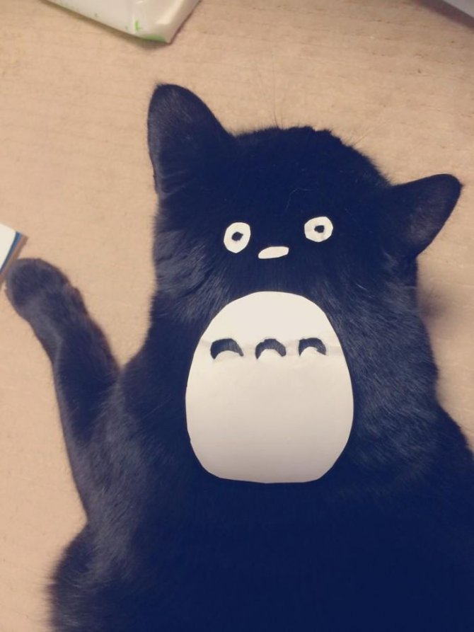 cat owners in japan are turning their pets into totoro 1 700