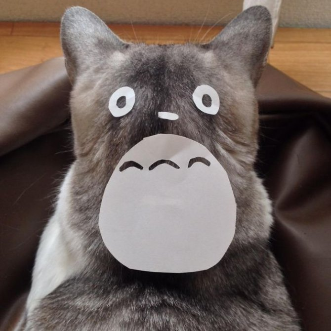 cat owners in japan are turning their pets into totoro 2 7001