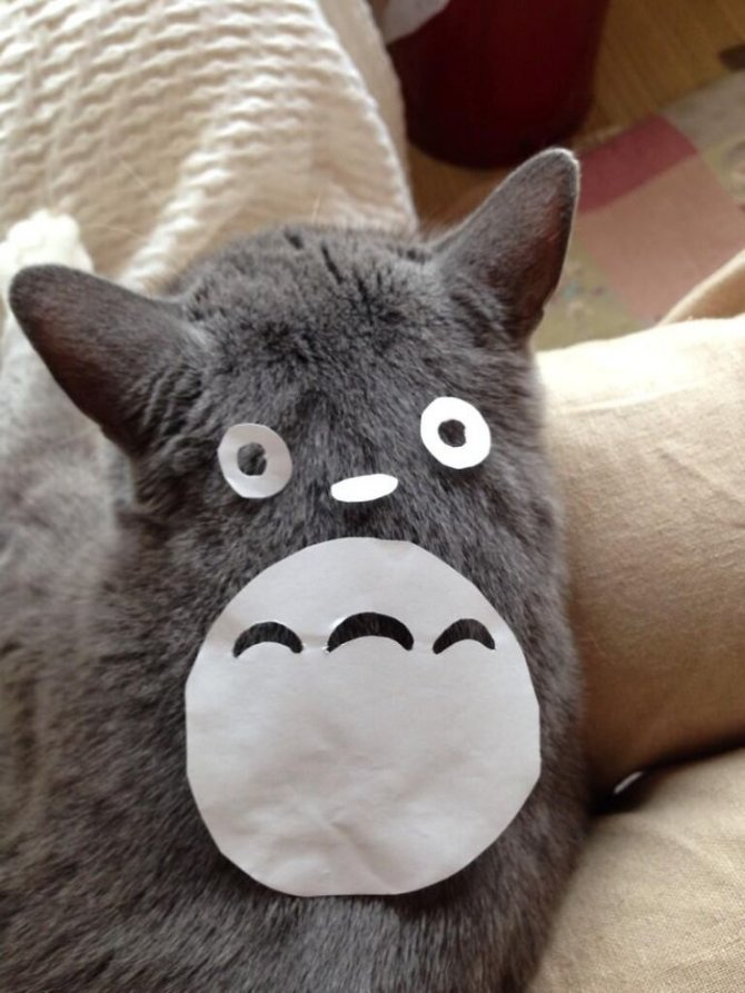 cat owners in japan are turning their pets into totoro 3 700