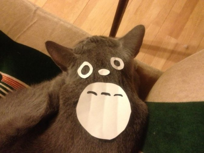cat owners in japan are turning their pets into totoro 4 700