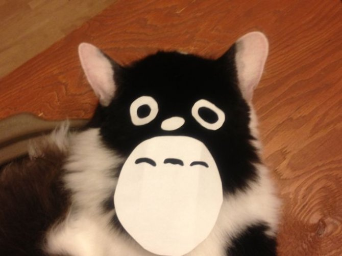 cat owners in japan are turning their pets into totoro 5 700