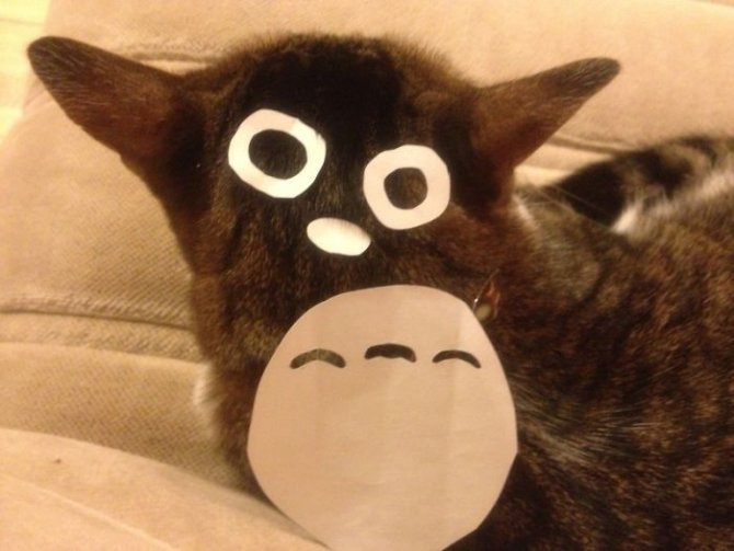 cat owners in japan are turning their pets into totoro 6 700
