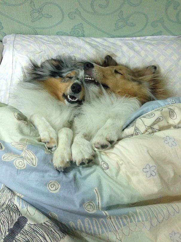 dog sleeping bed funny 1001 605