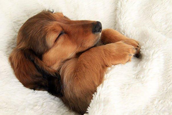 dog sleeping bed funny 104 605
